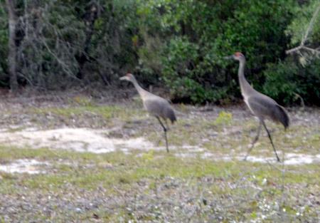 outdoors-cranes