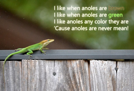 anole-song