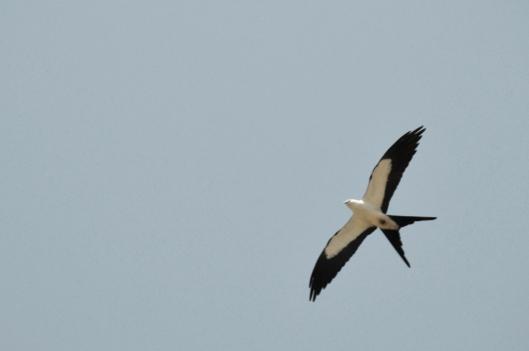 kite02