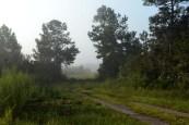 02silverspringsforest