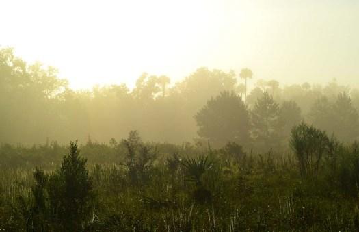 03silverspringsforest