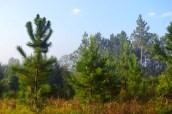 04silverspringsforest